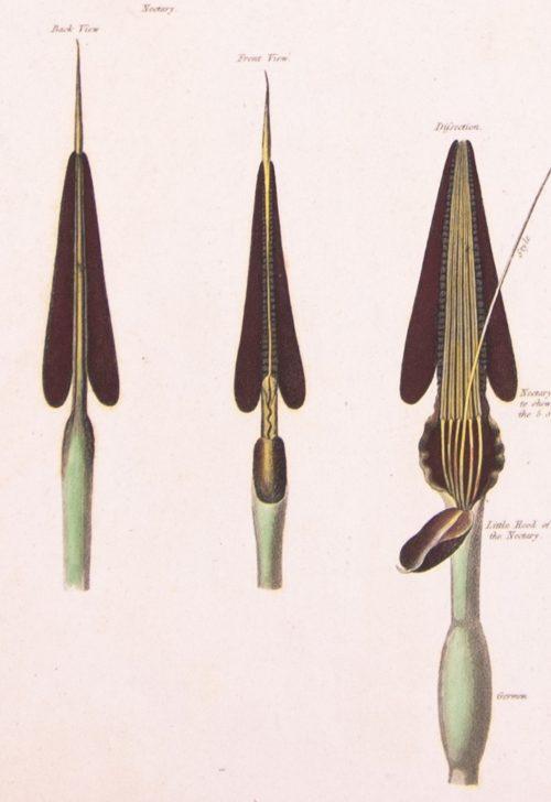 Anatomy of the Queen Flower detail 1.jpg