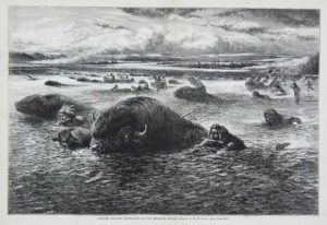 Indians Killing Buffalo in the Missouri River Harpers Weekly 1874