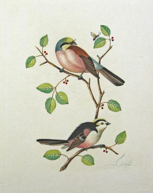Original Watercolor Of Colorful Birds