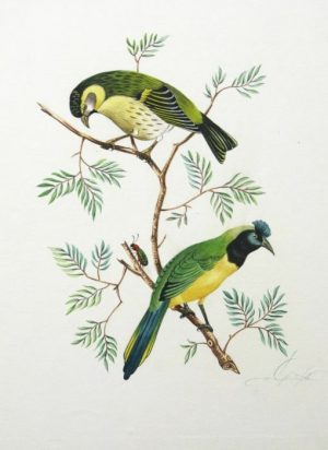 Original Watercolor Of Green Birds For Sale