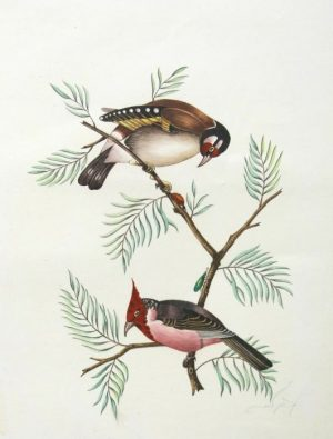 Original Watercolor Of Red Faced Birds For Sale