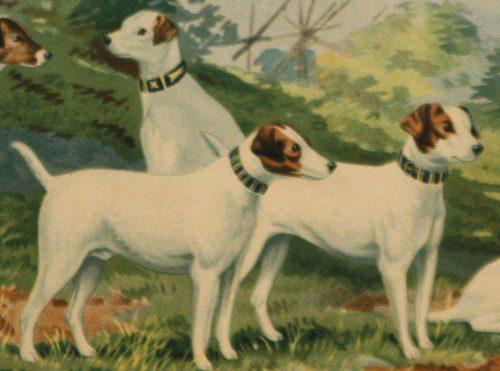 Pope- Jack Russell terriers detail 1