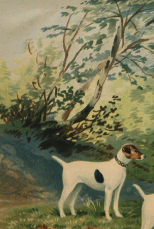 Pope- Jack Russell terriers detail 2