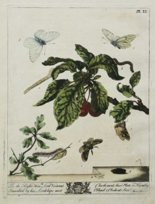 """""""The Aurelian, A Natural History Of English Moths And Butterflies Plate-IX"""" A Harris Moss Hand Colored Engraving For Sale"""