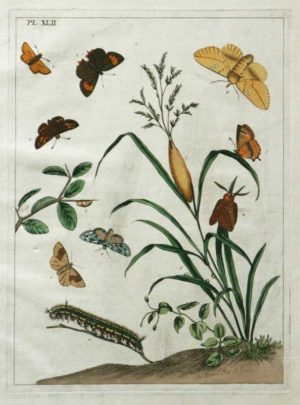 """The Aurelian, A Natural History Of Month And Butterflies Plate XLII"" Harris, Moses Hand Colored Engraving On Sale"