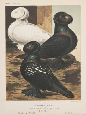"""Trumpeters, Russian Or New Type"" A Ludlow J.W. Chromolithograph Print For Sale"