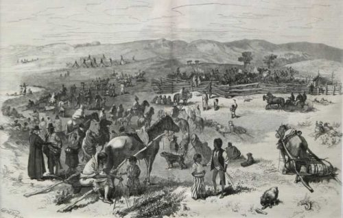 Shooting Cattle at Standing Rock Harpers Weekly